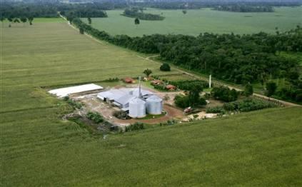 Corn plant in Brazil