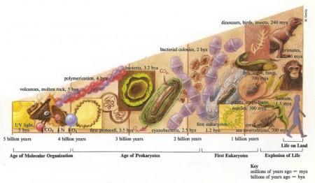 Cellular evolution diagram