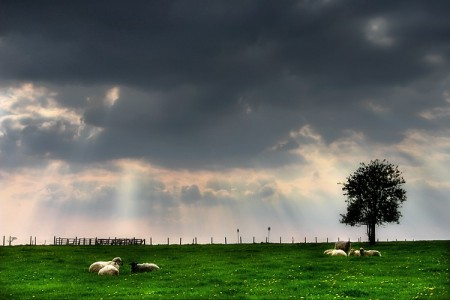 Sheeps and clouds